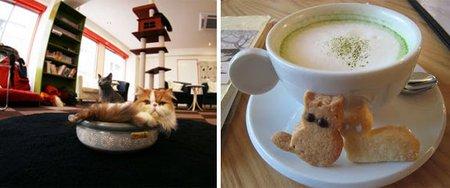 cat cafe 1